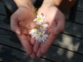 21-flower-22656_1920_don biodiversite