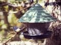 25-bird-2858587_1920_environnement favorable oiseau