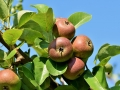 27-fruitbomen en fruitstruiken planten