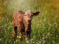 59-calf-829430_1920_biodiversite parcelle agri