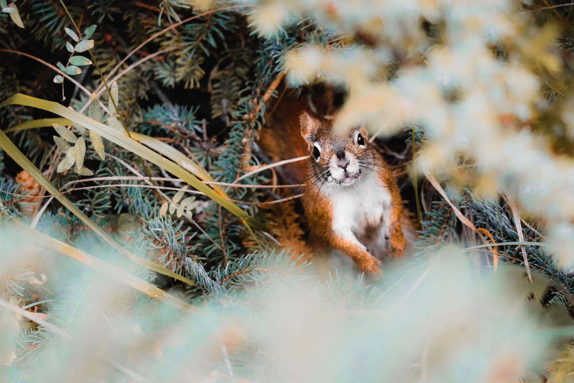 35-squirrel-3959195_1920_installer animaux