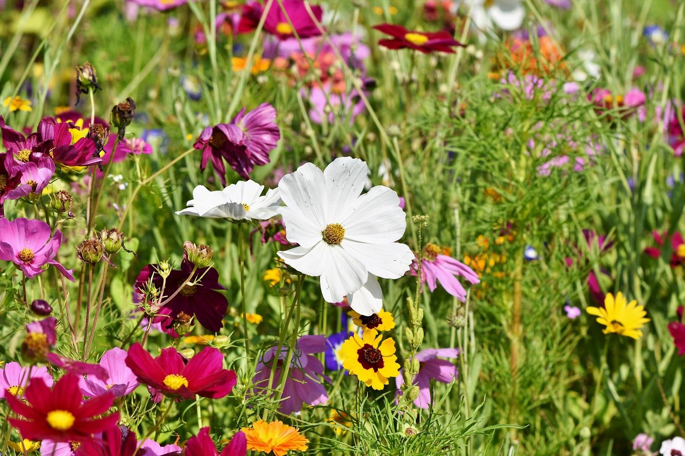 flower-meadow-3598562 @Pixabay