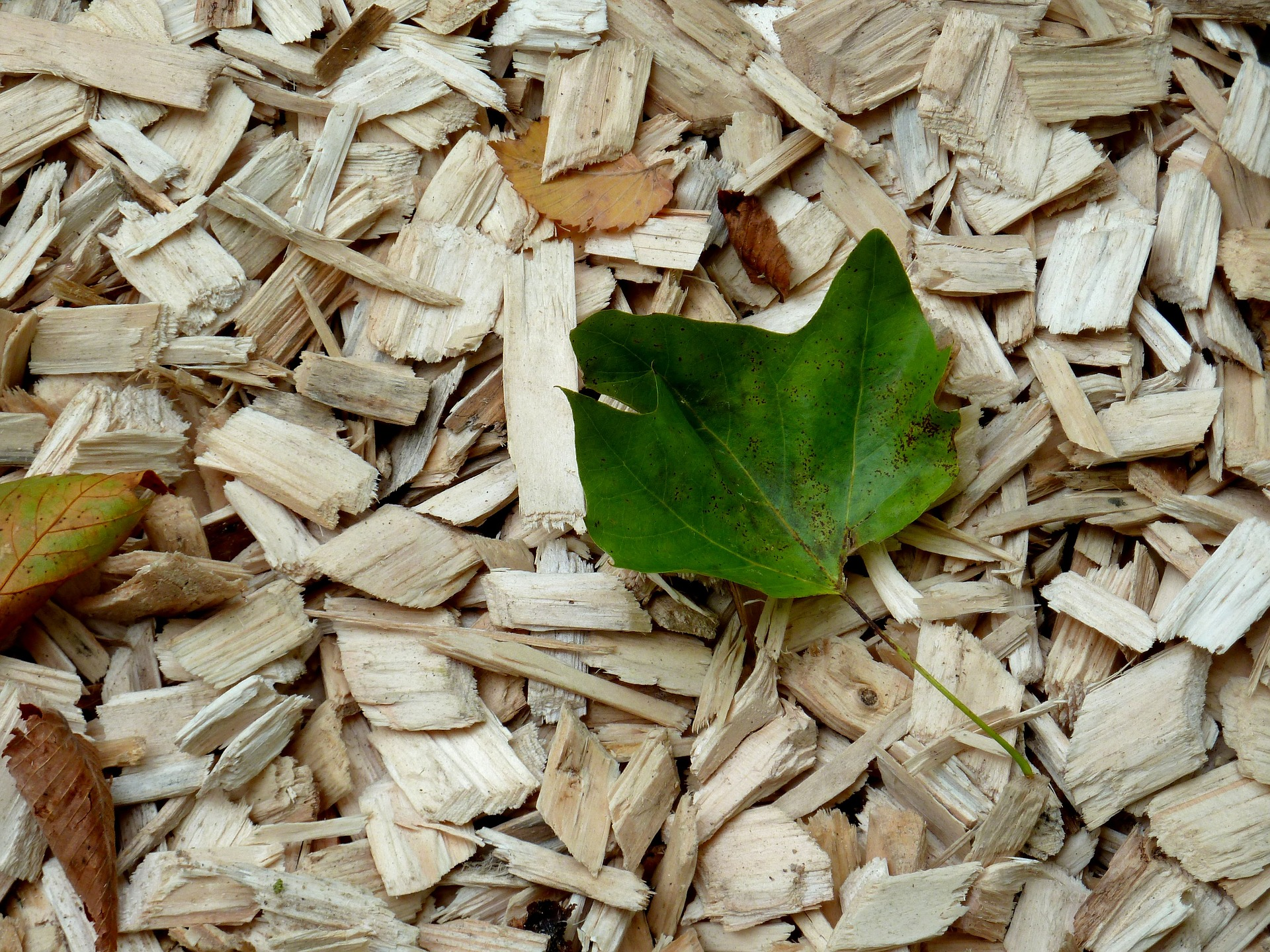 8-Wood-Chips-1722422_1920_entretien Sans Produit Chimique