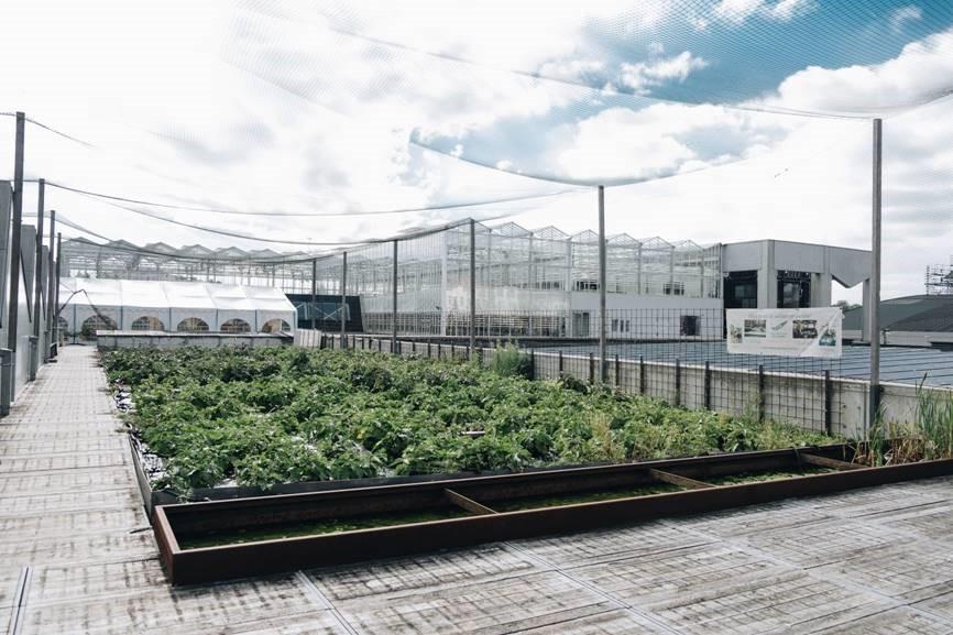 Urban farm1_BIGH - Abattoir1