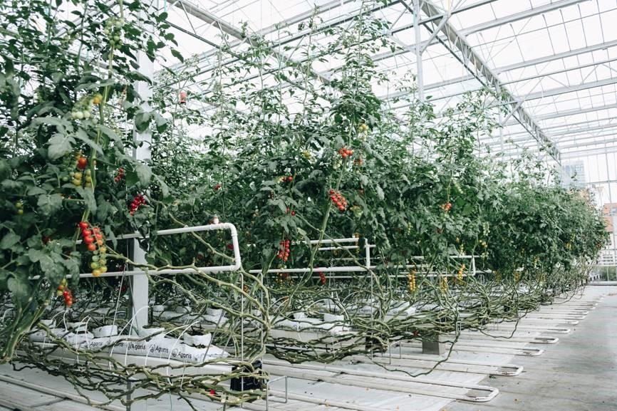 Urban farm2_système hydroponique_BIGH - Abattoir2